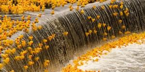 ducks-over-falls-orig_orig